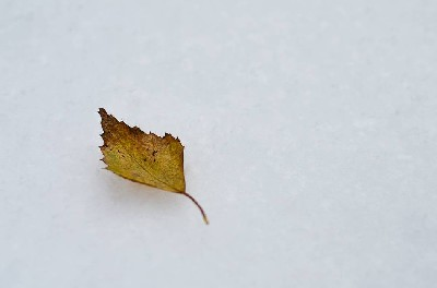 That Lonely Leaf In The Snow