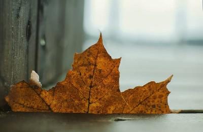 Random Single Leaf From Far Away